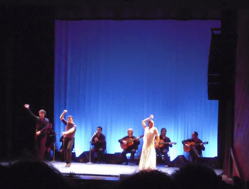 flamenco_azul-b