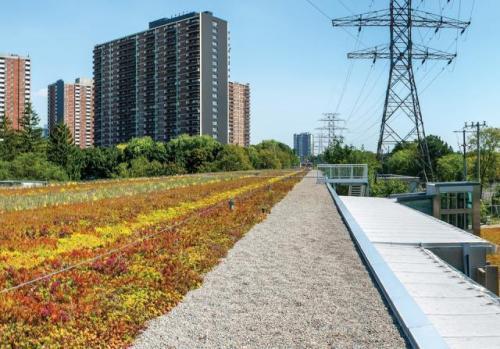Toronto_Green Roof_1