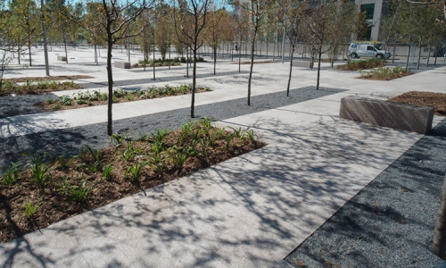 Granite pavers, trees, plantings, and fine gravel at June Callwood Park. Photo by gh3.